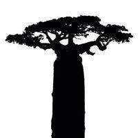African Studies Program / JSIS / University of Washington