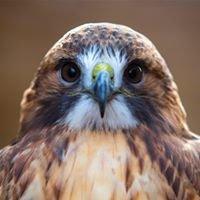 Avian Conservation Center of Appalachia