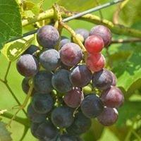 Hyde's Harvest Vineyard