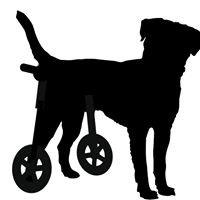 Ortopedia canina