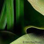 Kim Kauffman Synecdoche Studio