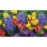 Schenectady Flower Shop/ Felthousen's Florist