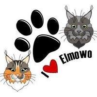 Elmowo PL Domowa Hodowla Kotów Rasy Maine Coon