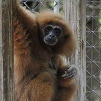 The Talkin' Monkeys Project