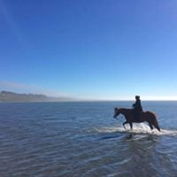 North Coast Horse Training