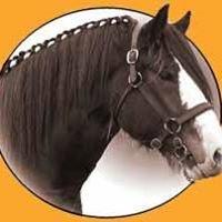 Aussie Heavy Horses