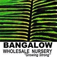 Bangalow Wholesale Nursery