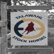 Talawahl ASH Stud