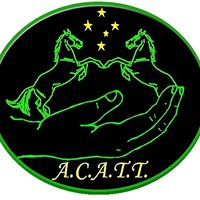 A.C.A.T.T. Equine Gait Analysis Clinic