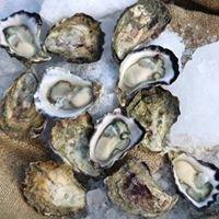 Moreton Bay Rock Oysters