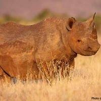Rhino Tours & Safari's
