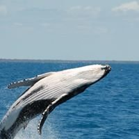 Whale Watching Tours Hervey Bay, Australia