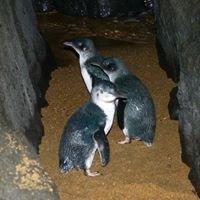 Low Head Penguin Tours