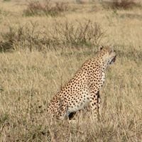 Southern Cross Safaris - Nairobi