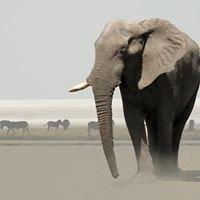 Abenteuer Afrika Safari
