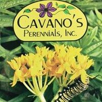 Cavano's Perennials, Inc.