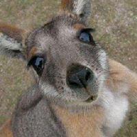 Australian Sightseeing Day Tours