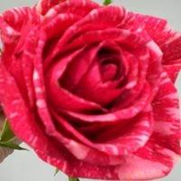 The Blumenhaus Florist