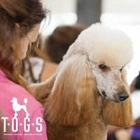 COUTURE DOGS Wellness and Grooming Spa