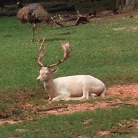 Wild  Animal Safari Tour Pine Mountain Ga
