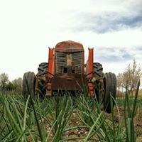 Amyo Farms