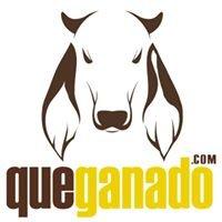 QueGanado