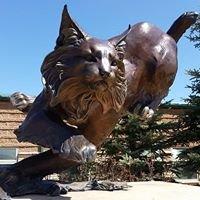 Custer County Schools