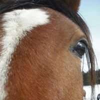 Authenticity With Horses