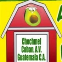 Granja Ch'och'mel de aguacate Hass en Cobán.