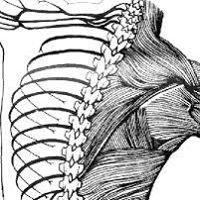 Wingert Chiropractic
