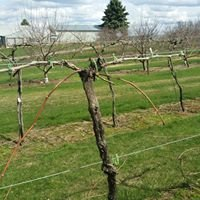 St Croix Winery & Apple Orchard