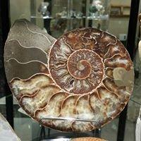 Rockwood Sticks & Stones & Fossilized Bones