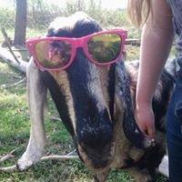 Happy Hoofers Farm