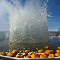 Utah Giant Pumpkin Drop