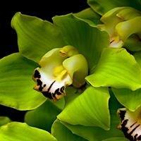 Westloop Floral