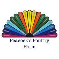 Peacock's Poultry Farm