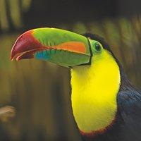 Osa Costa Rica