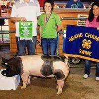 Divine Swine Show Pigs