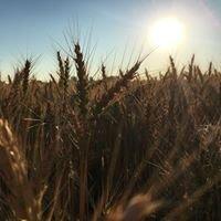 North Dakota Wheat Commission