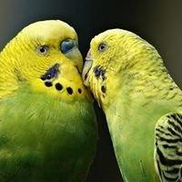 Diamond Avian Distributors