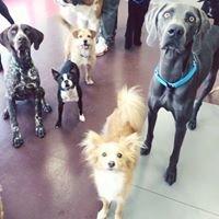 Virginia Woof Dog Daycare