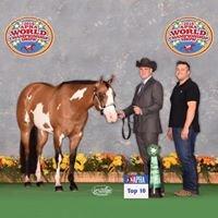 Abeln Show Horses