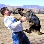 Cool K9's Dog Training