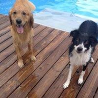 Pets Behave Dog Training