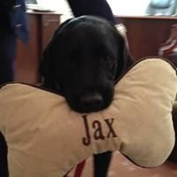 Jax the G.H. Herrmann Therapy Dog