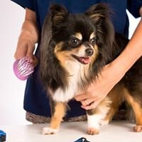 Britton Dog Grooming