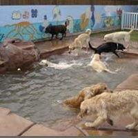 Tenaker Pet Care Center