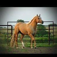 Crown Royal Farm Stallions