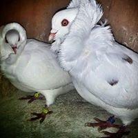 We Love Doves