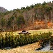 Bridge Creek Tree Farm